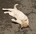 Cat, Dartington - geograph.org.uk - 1401280.jpg