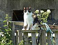Cat, Lannacombe - geograph.org.uk - 844339.jpg