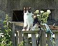 Cat, Lannacombe - geograph.org.uk - 844339.jpg