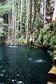 Cenote (3265690744).jpg