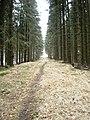 Cesta na Martinské Hole z Kuneradu - panoramio.jpg