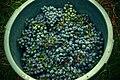 Cestos das vindimas do vinho verde.jpg