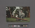 Ceylon elephant at work (NYPL Hades-2359913-4044678).tiff