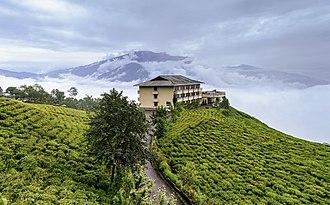 Indian tea culture - Cherry Resort inside Temi Tea Garden, Namchi, Sikkim