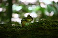 Chipmunk-wildlife 21 - West Virginia - ForestWander.jpg