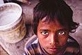 Chotu - Jaipur (11851853926).jpg