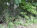 Ciężkowice park dworski, 2 poł. XIX fragment ogrodzenia nr 613934 (3).JPG