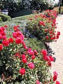 Clos du Val Winery, Napa Valley, California, USA (7218841740).jpg