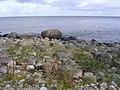Coast of Juminda peninsula, looking north - panoramio.jpg