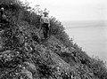 Collectie Nationaal Museum van Wereldculturen TM-10021151 Een steilie helling met bouwland wat wordt bewerkt door een arbeider Saba -Nederlandse Antillen fotograaf niet bekend.jpg