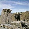 Collectie Nationaal Museum van Wereldculturen TM-20030095 Drenkplaats voor vee Sint Eustatius Boy Lawson (Fotograaf).jpg