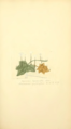 Coloured Figures of English Fungi or Mushrooms - t. 93.png
