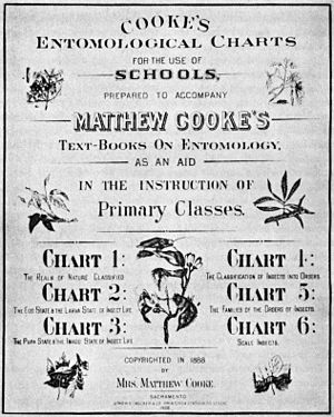 Matthew Cooke (entomologist) - Matthew Cook Entomological Chart