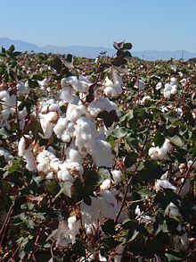 Forexpros us cotton 2
