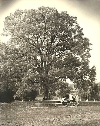 University of Wisconsin–Eau Claire - The Council Oak, symbol of the university
