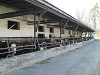Cowhouse Hrazany2.jpg