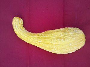 Cucurbita pepo - Image: Crooked Neck Squash