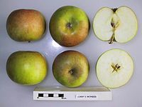 Cross section of Corry's Wonder, National Fruit Collection (acc. 1945-049).jpg
