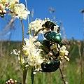Crowded flower (2333106249).jpg
