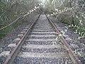 Csipkerózsika kastélya felé tartó vasút - panoramio.jpg