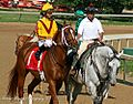 Curlin on his way to the post in the 2008 Stephen Foster Handicap (2972941426).jpg