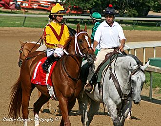 Curlin - Curlin in 2008 Stephen Foster Handicap