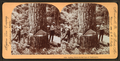Cutting timber in the state of Washington, U.S.A, by Singley, B. L. (Benjamin Lloyd) 4.png