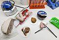 DNA-strekkoding av julemat - DNA barcoding of Christmas food (16034561745).jpg