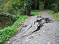 Damaged Lagan towpath, MInnowburn - geograph.org.uk - 1555014.jpg