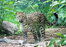 Zoo Tallinn – Wikipedia