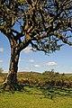 Dartmoor 0810 3593 (5064721125).jpg