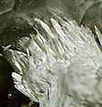 Dawsonite-169628.jpg