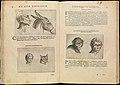 De Humana Physiognomonia. Libri III MET DP242799.jpg