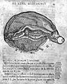 De la structure du cerveau... Wellcome M0014439.jpg