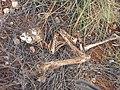 Dead Bird - Flickr - GregTheBusker.jpg