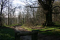 Delcombe Wood - geograph.org.uk - 373462.jpg