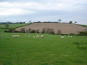 English: Denbigh fields. Grazing and crop land...