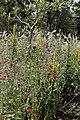 Denver Botanic Gardens 7-12 (19868739042).jpg