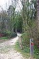 Dering Wood - waymarked path - geograph.org.uk - 398041.jpg