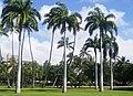 Diamond Head - Kapahulu - St. Louis, Honolulu, HI, USA - panoramio (15).jpg