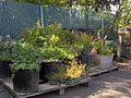 Dignity Village Garden.jpg