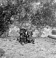 Dog, garden, Dachshund Fortepan 4515.jpg