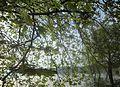 Dojran Lake 145.jpg