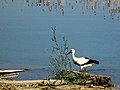 Dojran Lake 260.jpg
