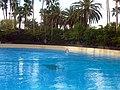 Dolphins (7981024942).jpg