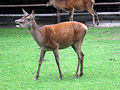 Dortmund-Zoo-IMG 5497-a.jpg