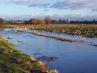 Doxey Marshes - Image: Doxey Marshes 2