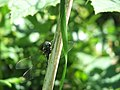Dragonfly (2689556725).jpg