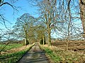 Drax, Pear Tree Avenue - geograph.org.uk - 115878.jpg