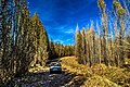 Drive Among The Poplars - panoramio.jpg